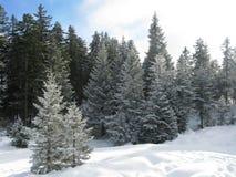 Het skiån in de alpen Royalty-vrije Stock Fotografie