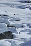 Het skiån in het binnenland stock foto's