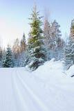Het skiån spoor en bomen Royalty-vrije Stock Fotografie