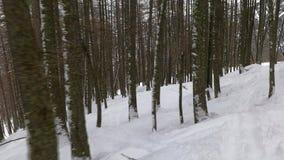 Het ski?en in het bos stock videobeelden