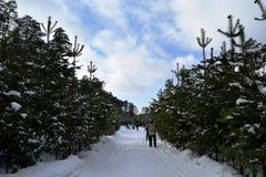 Het ski?en in bos Royalty-vrije Stock Foto's