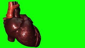 Het slaan van menselijk hart met het groene scherm en exemplaar-ruimte voor tekst royalty-vrije illustratie