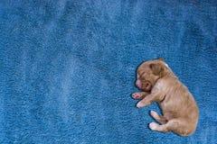 Het slaappuppy Royalty-vrije Stock Foto