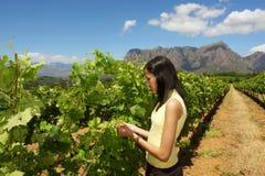 Het slanke mulatmeisje inspecteert wijnstok Stock Afbeelding