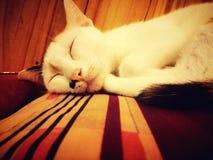 Het slapen cutie Royalty-vrije Stock Foto