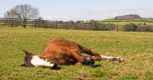 Het slapen in de zon Royalty-vrije Stock Afbeelding