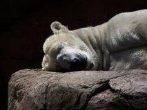 Het slapen Ijsbeer stock afbeelding