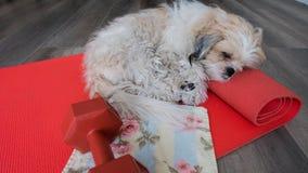 Het slapen op yogamat Royalty-vrije Stock Fotografie