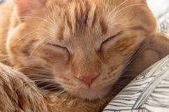 Het slapen rode kat Stock Fotografie