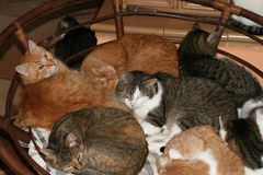 Het slapen van katten royalty-vrije stock foto's