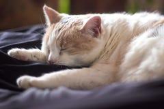 Het slapen witte kat stock afbeeldingen