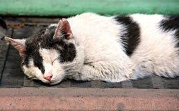 Het slapen zwart-witte kat Royalty-vrije Stock Foto