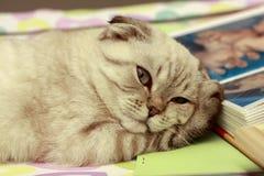 Het slaperige katje wordt gewaarschuwd over de camera stock afbeeldingen