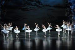 Het slingering-ballet van de zwaanzwerm Zwaanmeer stock afbeeldingen