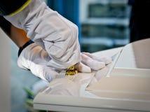 Het sluiten van het deksel van een kleurrijke kist in een lijkwagen of kerk vóór begrafenis stock afbeeldingen