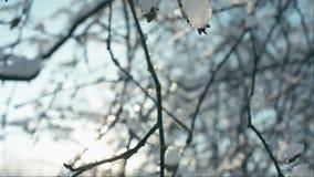 Het smelten stukken van sneeuw op takken stock videobeelden