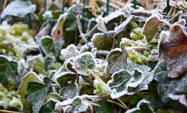 Het smelten van sneeuw op droog gras Stock Afbeelding