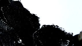 Het smeren van zwarte verf met een borstel op Witboek Het trekken met een borstel stock footage