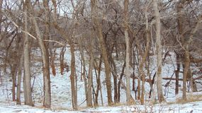 Het sneeuw Behandelde Noorden Texas Wooded Area Stock Foto's