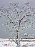 Het sneeuw behandelde strand van het boommoeras Stock Fotografie