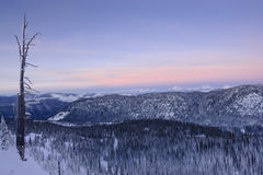 Het sneeuw Landschap van de Berg en Naakte Boom Stock Afbeeldingen
