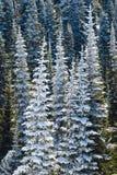 Het sneeuw Paradijs, zet Regenachtiger op royalty-vrije stock fotografie
