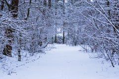 Het sneeuw wilde bosdielandschap, het hout in sneeuw, bosweg met boom wordt behandeld vertakt zich, wintertijdachtergrond stock afbeelding