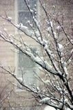 Het sneeuwen Royalty-vrije Stock Afbeeldingen