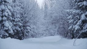 Het sneeuwen in bos tijdens de winter stock videobeelden
