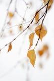 Het sneeuwen in de herfst Royalty-vrije Stock Afbeeldingen