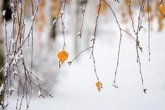 Het sneeuwen in de herfst Stock Foto