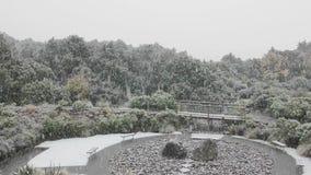 Het sneeuwen in de tuin stock footage
