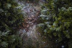 Het sneeuwen in het meest forrest Stock Foto's