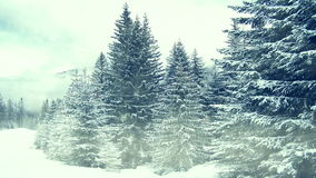 Het sneeuwen op bomen De winter in bergen stock videobeelden