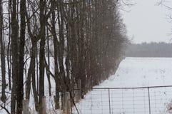 Het sneeuwen op een weilandgebied en bomen langs de rand van het stock foto's