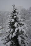 Het sneeuwen over een speld Stock Afbeeldingen