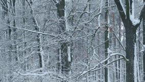 Het sneeuwen in vergankelijk bos op achtergrond van leafless bomen stock videobeelden