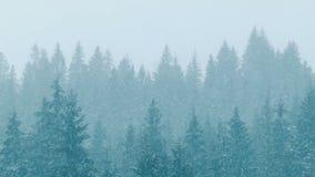 Het sneeuwhout, dalingensneeuw stock video