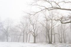 het sneeuwpark van de de winterstad in mist Stock Afbeeldingen