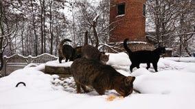 In het sneeuwseizoen, dakloze die katten in de sneeuw in werking worden gesteld royalty-vrije stock foto's