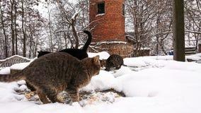 In het sneeuwseizoen, dakloze die katten in de sneeuw in werking worden gesteld royalty-vrije stock foto