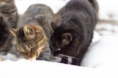 In het sneeuwseizoen, dakloze die katten in de sneeuw in werking worden gesteld stock foto