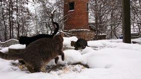 In het sneeuwseizoen, dakloze die katten in de sneeuw in werking worden gesteld royalty-vrije stock fotografie