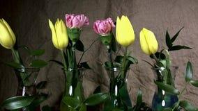 Het snelle bloeien van bloem stock video