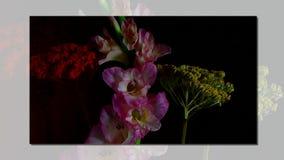 Het snelle bloeien van roze bloem stock video