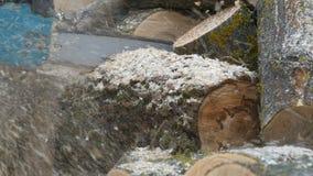 Het snijden door hout met kettingzaag stock footage