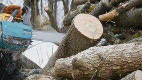 Het snijden door hout met kettingzaag stock videobeelden