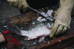 Het snijden en het schoonmaken vissen met een mes op de scherpe lijst stock afbeelding