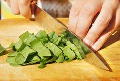 Het snijden van bladeren van spinazie voor salade Stock Foto