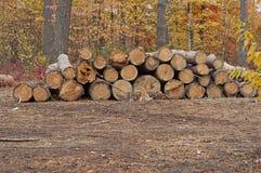 Het snijden van bomen Stock Foto